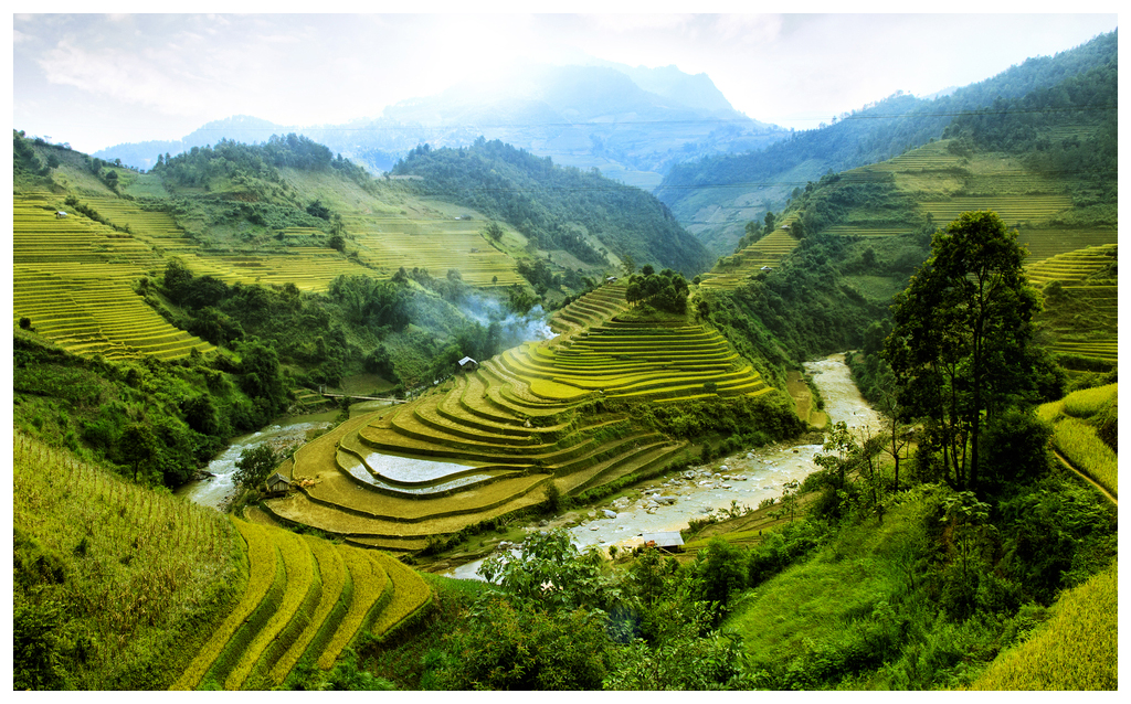rice paddy valley I